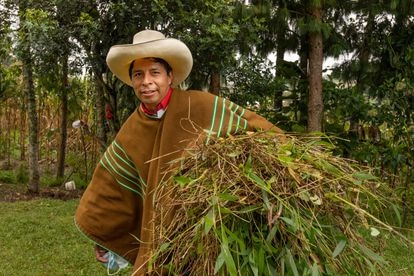 Pedro Castillo  returning home after collecting plants for fodder in late May.