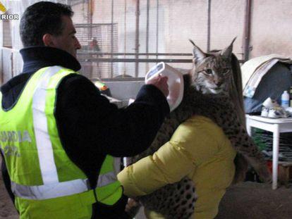 Civil Guard officers rescue an Iberian lynx.