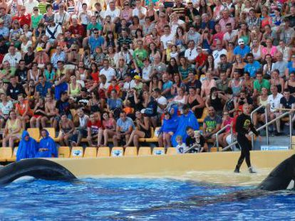 """Trainers with the orcas during Loro Parque's """"Orca Ocean"""" show. Since Martínez's death, the trainers are no longer permitted to enter the water with the animals."""