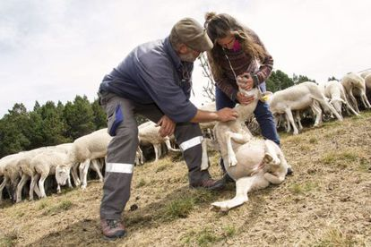 Shepherding instructor Armand Flaujat oversees student Marina Collado's internship.