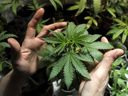 Uruguay is the only country to have fully legalized marijuana.