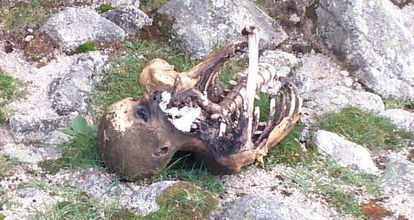The body in La Pedriza, before it was removed by the authorities.