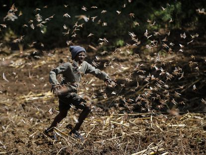 A swarm of locusts in Nakuru, Kenya.
