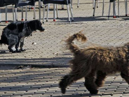 In recent years, Spanish cities have seen a huge increase in dog numbers.