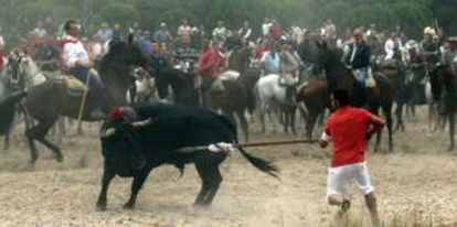 A man sticks a spear into the bull at last week's Toro de la Vega event in Tordesillas.