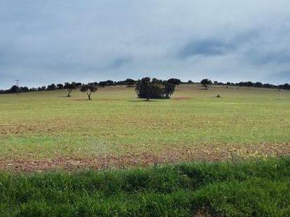 A field between Torrenueva and Torre de Juan Abad (Ciudad Real) where Quantum is searching for rare earth metals.