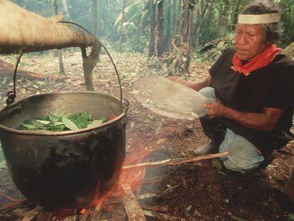 A shaman boils leaves to prepare ayahuasca.