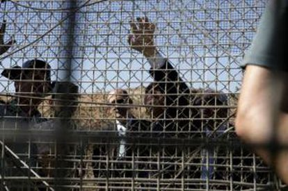 Spain installed anti-climb mesh on the border fence in Melilla last July.