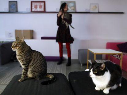 La Gatoteca owner Eva Aznar with three of her furry tenants.
