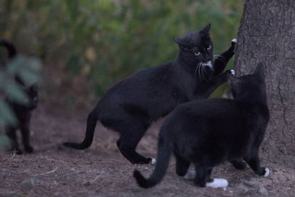 Two cats in the colony at the Arturo Soria park in Madrid.