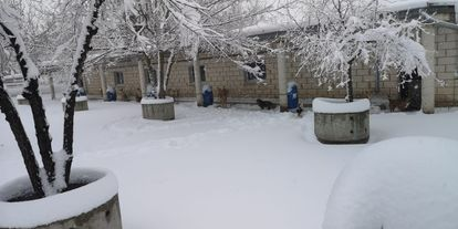 Some dogs at SPAP survived the blizzard out in the open.