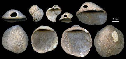 Broken seashells found in a cave in Los Aviones (Cartagena).