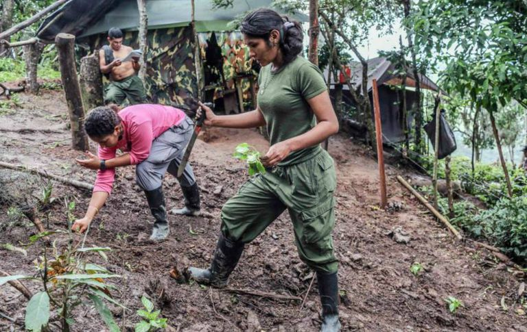 FARC guerrillas working the land in a holding area.