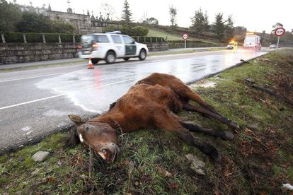 A dead horse by the side of the road near Vigo. The motorist was seriously injured.
