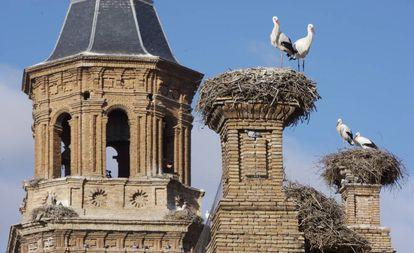 White stork on the collegiate church of San Miguel, in Alfaro (La Rioja).