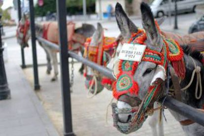 Stalls for the donkey rides in the center of Mijas.