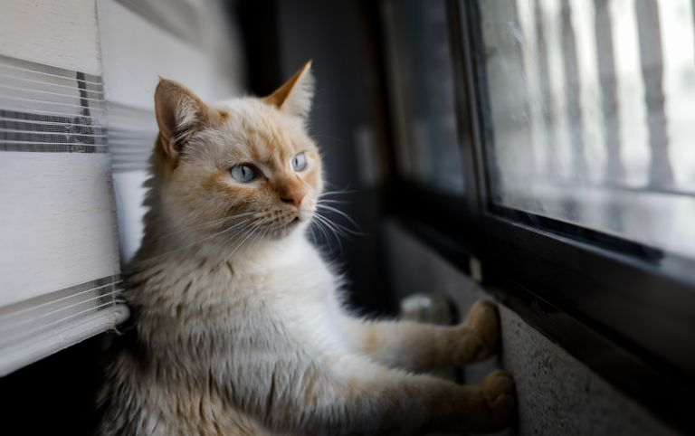 A pet cat looks out of a window of a home in Madrid.