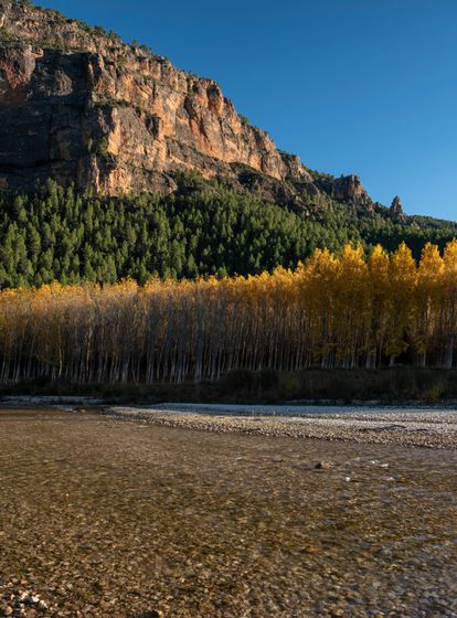 Among the foothills of the mountain ranges of Alcaraz and Segura, in southwest Albacete, the autumn charms of the natural park of Los Calares del Mundo y de la Sima go well beyong the famous river source known as Chorros del río Mundo. There are the colors of the gallery forests running along other rivers in the area, including the Segura, Zumeta, Taibilla and Bogarra. And there is the remote forest of Torca de los Melojos, which is accessible from the starting point of Fuente de las Raigadas, in Riópar. The trail is between seven and eight kilometers in total, and cuts through pine, holly, maple, kermes oak and yew. Inside the torca, which is a circular depression in the land with steep sides, there is a singular oak grove with ancient specimens that manage to survive because of the high humidity content. For more information: areasprotegidas.castillalamancha.es and turismosierradelsegura.es