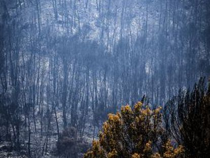The Sa Coma Freda valley after the wildfire had passed through.
