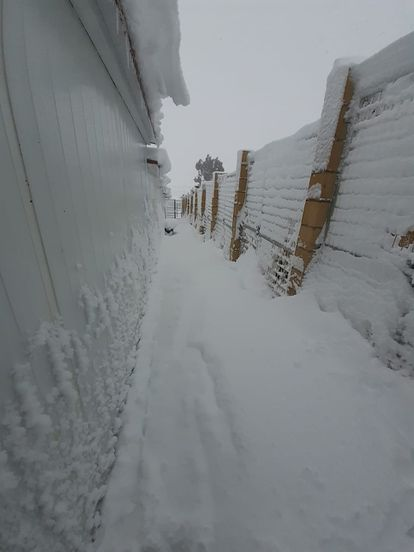 Open-air dog pens at the Animal Rescue España shelter were covered with snow.