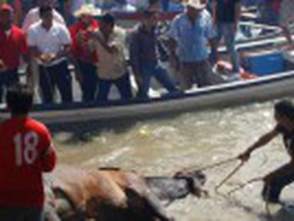 In Tlacotalpan, Veracruz, the animals are dragged through a river and beaten by locals, many of whom are inebriated