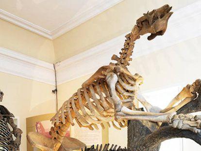 Skeletons from the Brazilian Pleistocene epoch, around 1.8 million years ago.