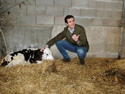 PP leader Pablo Casado on the campaign trail.