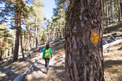 This is a classic trail in the Sierra de Guadarrama that is named after the Austrian mountaineer Eduard Schmidt – or Schmid – who established it in 1926. It starts in the Puerto de Navacerrada and ends in the Royal Spanish Society of Mountaineering hostel in Peñalara, both of which are in the Madrid region, though most of the route lies to the north of the Siete Picos in Segovia. The Schmid Way does enter Madrid at the meeting point Collado Ventoso, passing to the south of it en route to Fuenfría in Cercedilla. Eight kilometers long and without too much of a climb, it takes in springs, streams, pine forests and meadows. More information: madrid.org
