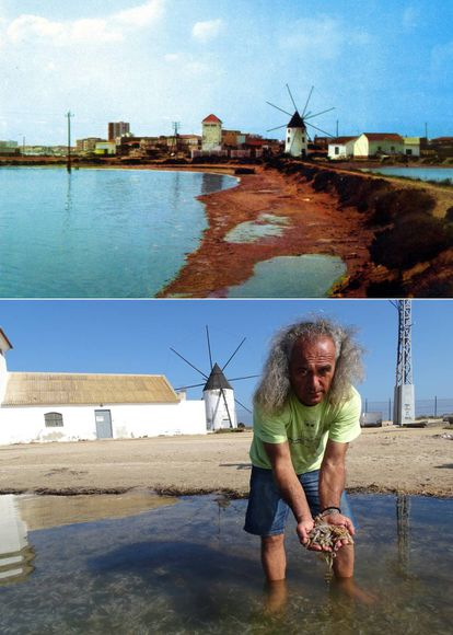 Above, a mill on the coast of the Mar Menor, San Pedro del Pinatar from a 1970s postcard. Below, Pedro García, director of the Association of Southeast Naturalists, holds some of the fish that died in one spot on October 13.