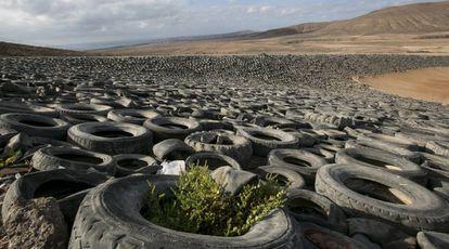 Tires at the Zurita plant in Fuerteventura.
