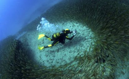 A scuba-diver photographing a school of fish in Gran Canaria.
