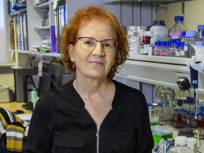 Margarita del Val, head of the Global Health initiative at Spain's CSIC.