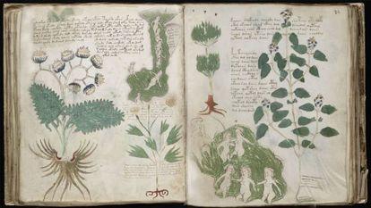 The mysterious 'Voynich Manuscript.'