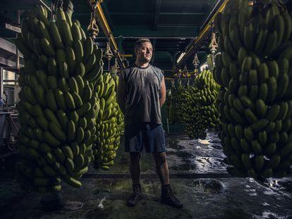 Yulian Lorenzo, at a banana packing plant in Fuencaliente (La Palma).