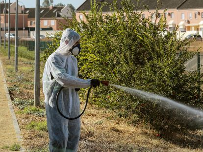 Fumigation in Coria del Río by the local council in a bid to stop the spread of the West Nile virus.