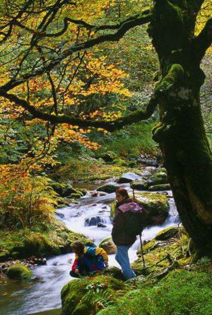 The Muniellos natural reserve in Asturias.