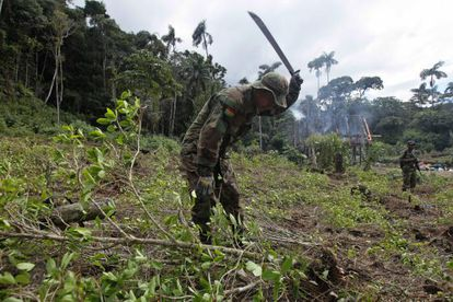 A Bolivian soldier helps destroy an illegal coca field in a rural area.