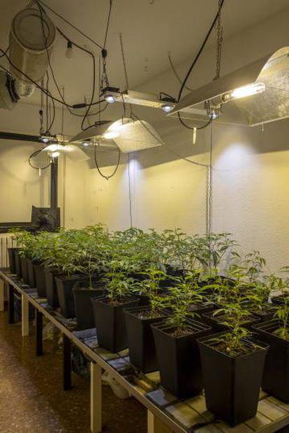 An indoor crop.