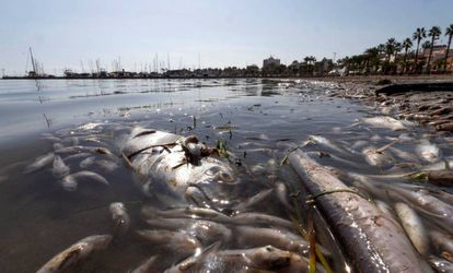 Dead fish floating on the surface of the Mar Menor on October 13.