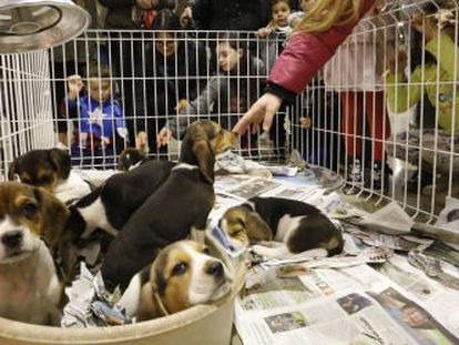 A pet fair in Terrassa, Barcelona province.