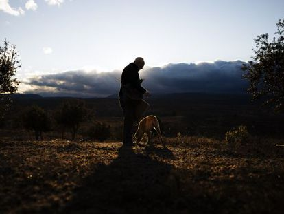 Truffle producer Ángel Doñate, with his dog Dulce.