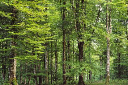 One of the best places to gaze at beech and fir trees, this forest can be explored by both foot and bicycle using a number of marked trails. In autumn, the mating calls of deer provide a spectacular soundscape.