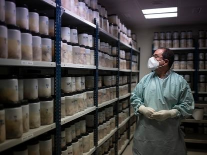 Pathologist Alberto Rábano examines a bank of donated brains at the CIEN Tissue Bank in Madrid.