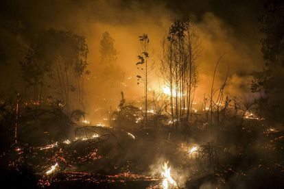 Flames and smoke rise up during a forest fire in Lousame, near A Coruña, on August 30, 2013. The rise in the average global temperature and less rainfall will create the perfect conditions for forest fires, especially in mountainous areas. Over the past years, forest fires have become larger (consuming more than 500 hectares), more severe and more difficult to control.