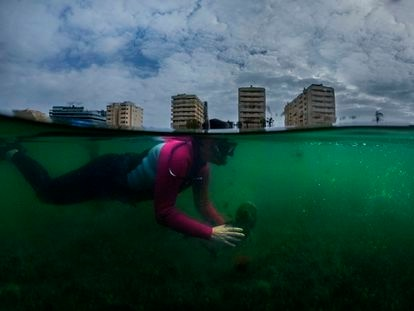 The biologist Francisca Giménez Casalduero takes samples from the Mar Menor.