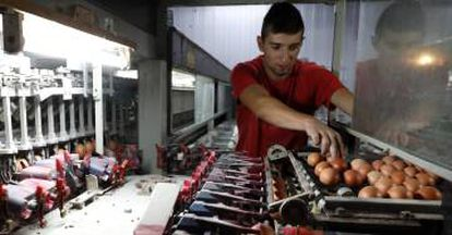 A worker at Spain's Granjas Redondo poultry farm.