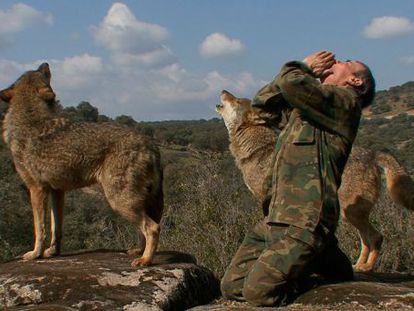 Marcos Rodríguez Pantoja howls alongside two wolves in a scene from the documentary about his life in the mountains, 'Marcos, the lone wolf'.