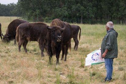 Alberto Hearns alimentando a su rebaño.