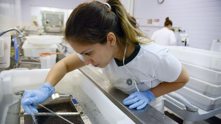 A specialist examines the virus in a laboratory in Campinas, Brazil.