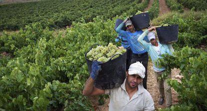 Grape pickers in Aldeanueva de Ebro (La Rioja) during the last harvest.